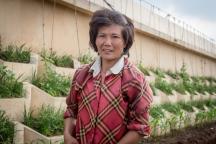 agricultora. pertinho de Pyongyang